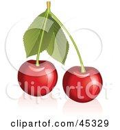 Fresh And Shiny Stem With Cherries