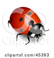 Royalty Free RF Clipart Illustration Of A Shiny Red Ladybug With Light Reflecting Off Of Its Back by Oligo