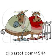Old Cows Walking Together Clipart