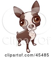 Royalty Free RF Clipart Illustration Of A Boston Terrier Dog Looking Up With His Big Eyes by John Schwegel