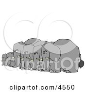 Herd Of Small And Big Elephants Standing Together In A Row Clipart