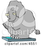 Obese Elephant Standing On A Weight Scale Clipart