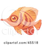Shy Orange And Red Striped Fish In Profile