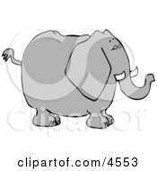 Big Elephant With Tusks