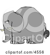Elephant With Tusks Clipart