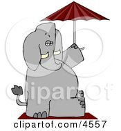 Anthropomorphic Elephant Sitting Under An Umbrella
