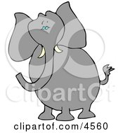 Alert Elephant With Tusks