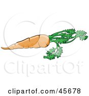 Royalty Free RF Clipart Illustration Of A Fresh Orange Carrot With The Leaves