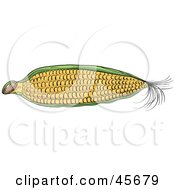 Royalty Free RF Clipart Illustration Of A Partially Husked Ear Of Corn
