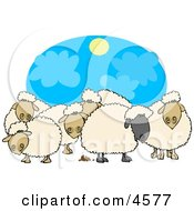 Herd Of Black And White Sheep Standing Together Under The Sun Clipart