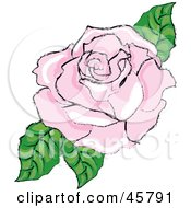 Fully Bloomed Pink Rose Blossom With Leaves