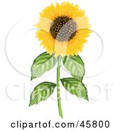 Royalty Free RF Clipart Illustration Of A Fully Bloomed Yellow Sunflower On A Thick Stem