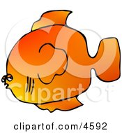 Orange Saltwater Fish