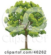 Royalty Free RF Clipart Illustration Of A Green And Lush Mature Park Tree