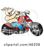 Clipart Illustration Of A Happy Shirtless Pig In Shades Riding A Red Chopper