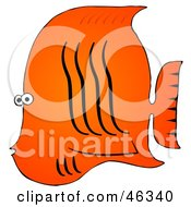 Tropical Orange Fish With Black Wavy Lines