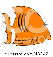 Black And Orange Salt Water Fish In Profile
