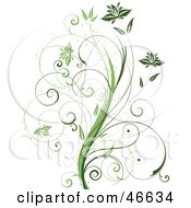 Royalty Free RF Clipart Illustration Of A Beautiful Organic Green Plant With Tendril Leaves On White by KJ Pargeter