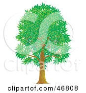 Royalty Free RF Clipart Illustration Of A Tall Green Park Tree With Summer Or Spring Foliage by Alex Bannykh