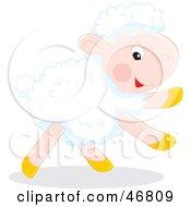 Running White Lamb With White Fleece