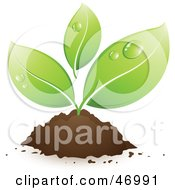 Royalty Free RF Clipart Illustration Of Morning Dew On The Leaves Of A Small Growing Plant Emerging From Dirt
