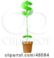 Green Dollar Symbol Potted Plant