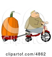 Boy Towing An Oversized Pumpkin Behind His Tricycle
