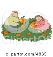 Man  Woman Picking Fresh Pumpkins From A Pumpkin Patch