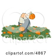 Farmer Harvesting Halloween Pumpkins From A Pumpkin Patch