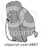 Human-Like Obese Elephant Jump Roping