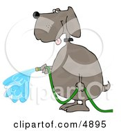 Human Like Dog Watering Outdoor Plants With A Standard Household Garden Hose Clipart