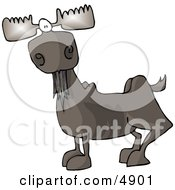 Full Grown Bull Moose With Antlers Clipart