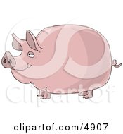 Big Fat Pink Pig Clipart