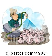 Poster, Art Print Of Farmer Watering His Pigs With Fertilizer - Livestock Concept