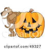 Cougar Mascot Character With A Pumpkin