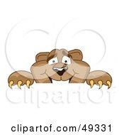 Cougar Mascot Character Peeking Over A Surface