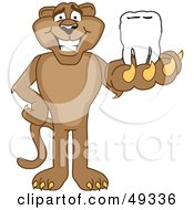 Royalty Free RF Clipart Illustration Of A Cougar Mascot Character Holding A Tooth by Toons4Biz