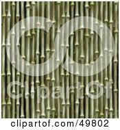Green Bamboo Stalk Background