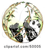 Royalty Free RF Clipart Illustration Of A Giant Panda In A Circle Of Bamboo Stalks