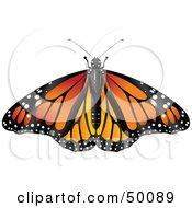 Royalty Free RF Clipart Illustration Of A Spanned Orange Monarch Butterfly