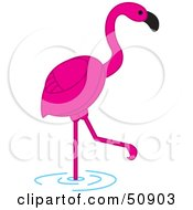 Pink Flamingo Wading In Shallow Water