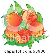 Royalty Free RF Clipart Illustration Of Fresh Growing Pomegranate Fruits With Green Leaves