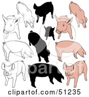 Royalty Free RF Clipart Illustration Of A Digital Collage Of Pigs In Color Outlines And Silhouettes Version 2