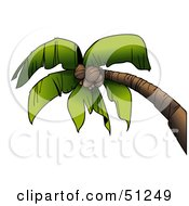 Royalty Free RF Clipart Illustration Of A Coconut Palm Tree Version 1 by dero