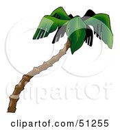 Royalty Free RF Clipart Illustration Of A Coconut Palm Tree Version 3 by dero