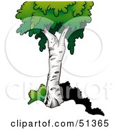 Clipart Illustration Of A Mature Birch Tree