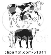 Royalty Free RF Clipart Illustration Of A Digital Collage Of Black And White Dairy Cow Outlines Version 3 by dero