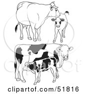 Royalty Free RF Clipart Illustration Of A Digital Collage Of Black And White Dairy Cow Outlines Version 4 by dero