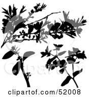 Poster, Art Print Of Digital Collage Of Floral Elements - Version 11