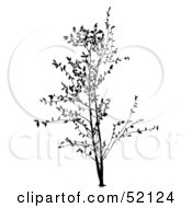Royalty Free RF Clipart Illustration Of A Black Tree Silhouette Version 3